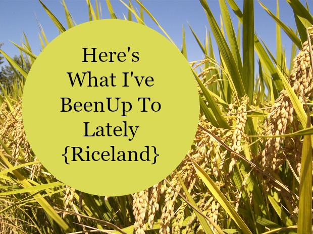 Here's What I've Been Up To Lately {Riceland}