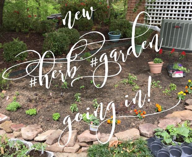 Kitchen Basics: Kitchen Herb Garden, Part 1