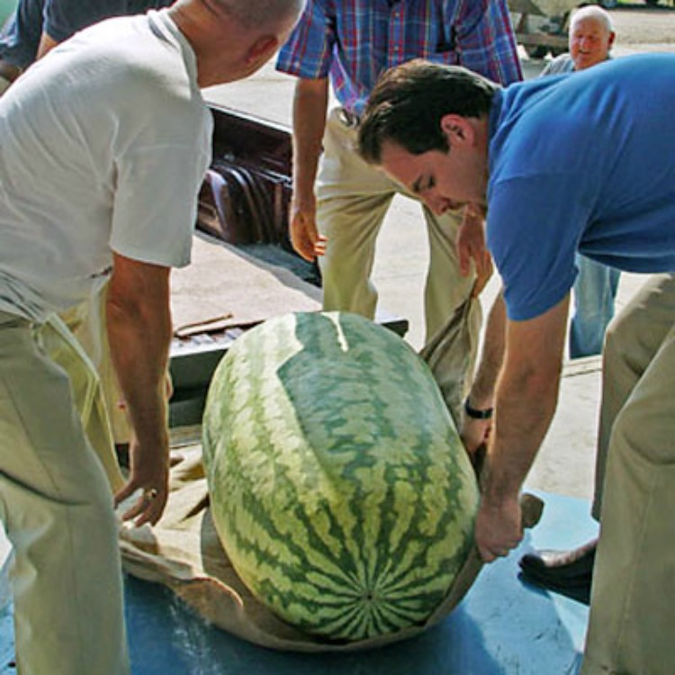 2005 World's Largest Watermelon Photo: Google Images